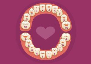 Порядок прорезывания молочных зубов - схемма